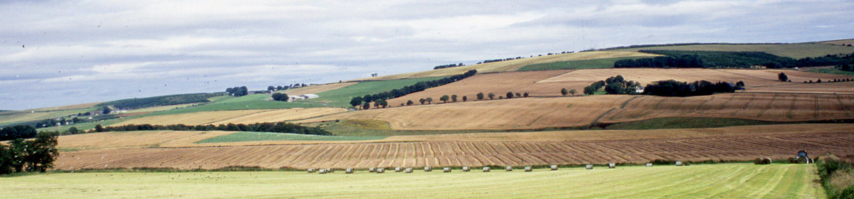 curvedflatlands